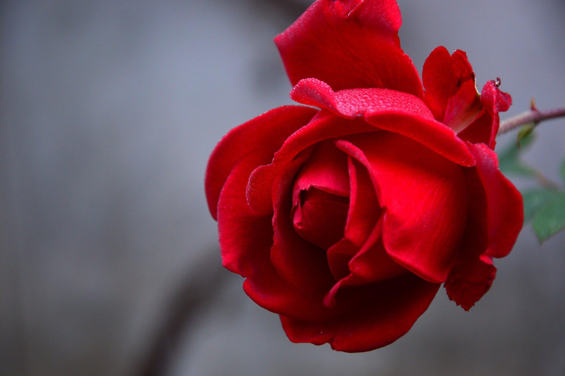 Revivez la bénédiction des roses de la Sant Jordi ce 23 avril